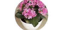 pinkflowerbutton