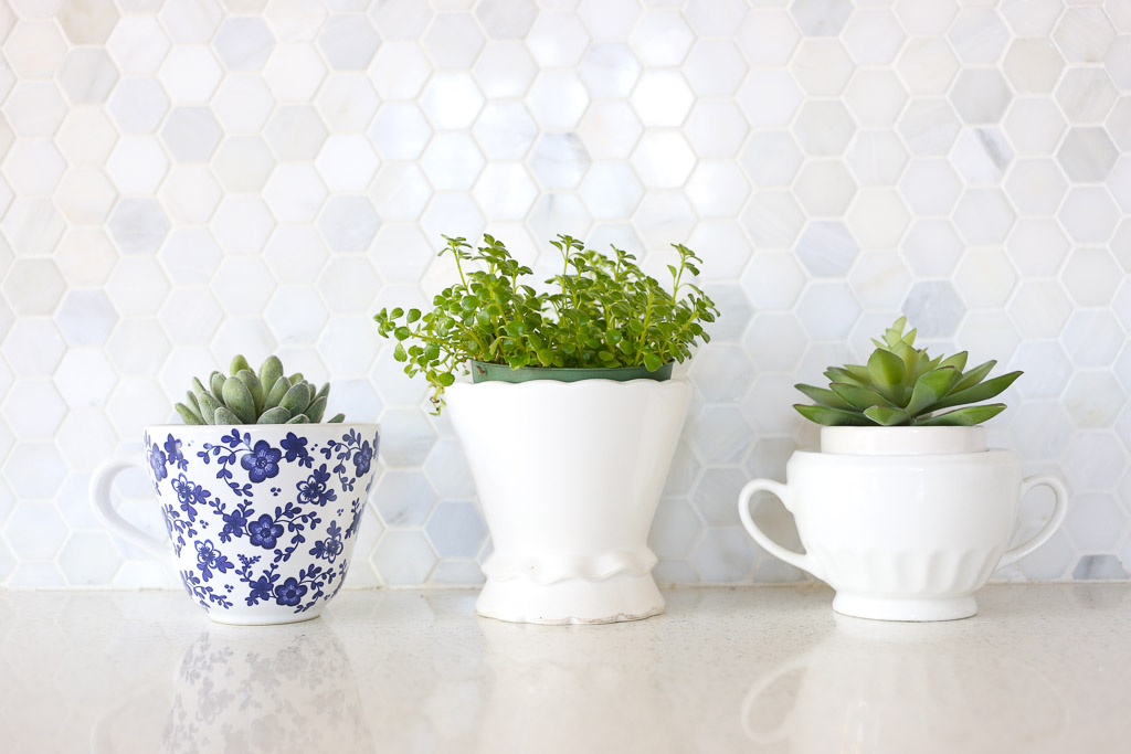 White and Navy Plant Vessels, Succulents| Mamas Dance-2